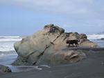 Beach 3. Kalaloch