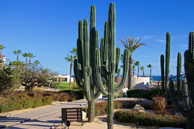 Love the cactus.