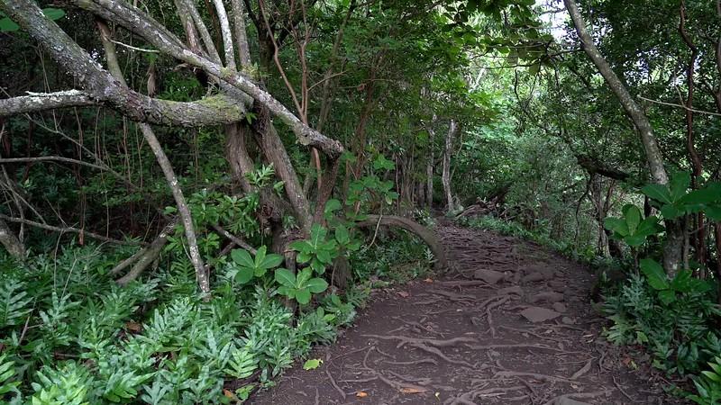 Pipiwai Trail Hike
