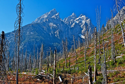 Taken on a hike near Jenny Lake, which is right at the base of the Tetons.