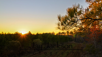 Sunset from a deer stand - Roba, AL