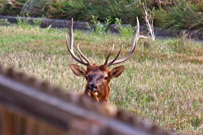 September 2012, he moved right up to the fence at our backyard and looked up at me to see what I was doing.