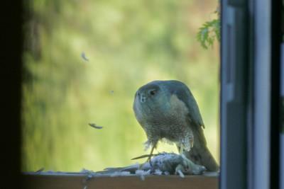 Hawk Kill