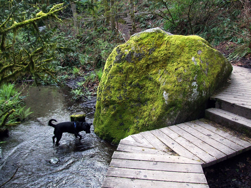 Ravenna Park Boulder, 80 lb lab for scale.
