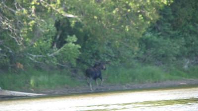 Groundhog River 2010 -  (71 of 95)