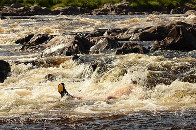 ashuapmushuan_river_july_2012_(393)