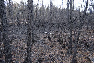 Feb 22, 2009 - Wharton State Forest
