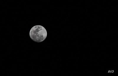 Luna / Manzanillo