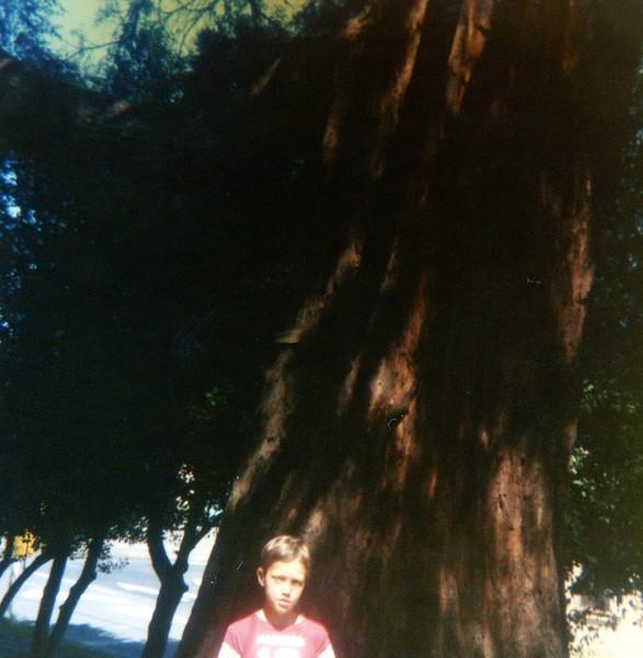 In the redwoods