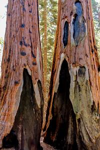 sequoia parents-9433