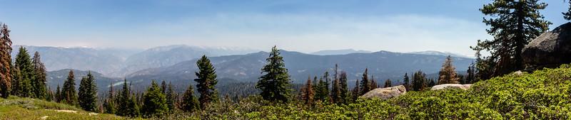 sequoia--3