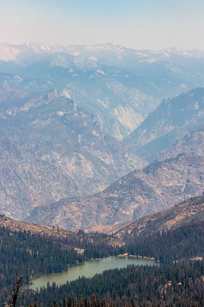 sequoia-3476
