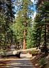 sequoia parents-9347
