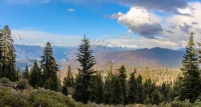 sequoia parents--2