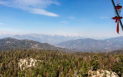 sequoia-3656