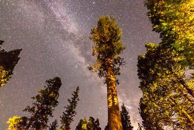 sequoia-3343