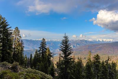 sequoia parents-9491