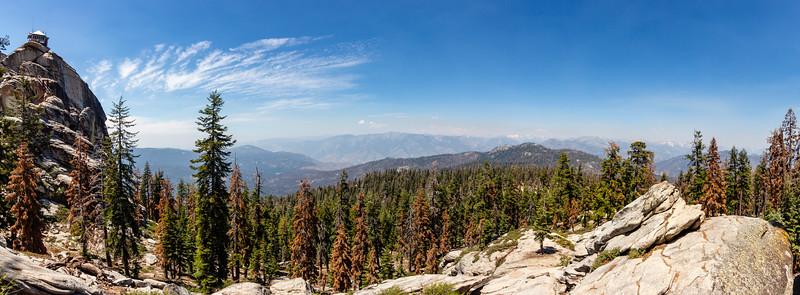sequoia--7