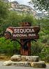 sequoia parents-7646