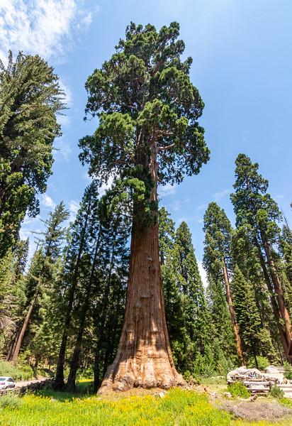sequoia-4151