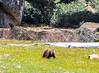 sequoia parents-8013