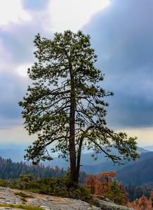 sequoia parents-9254