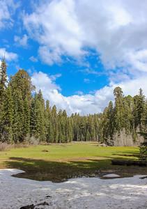 sequoia parents-8010