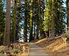 sequoia parents-9480