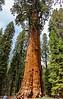 sequoia parents-9443