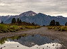 mammoth and ancient bristlecone-2636