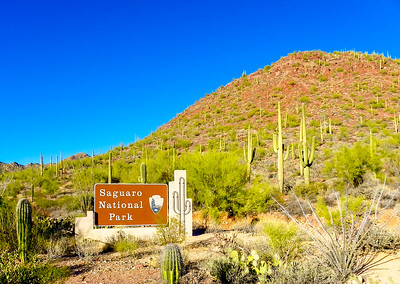 saguaro national park-1095