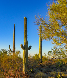 saguaro national park-1148