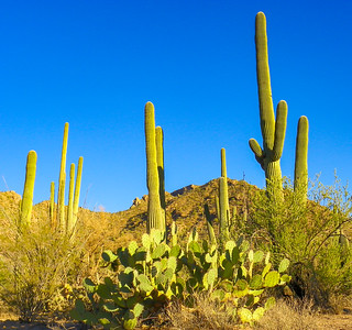 saguaro national park-1114