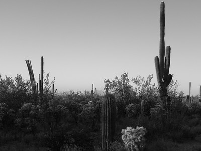 saguaro national park-1168