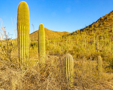 saguaro national park-1123