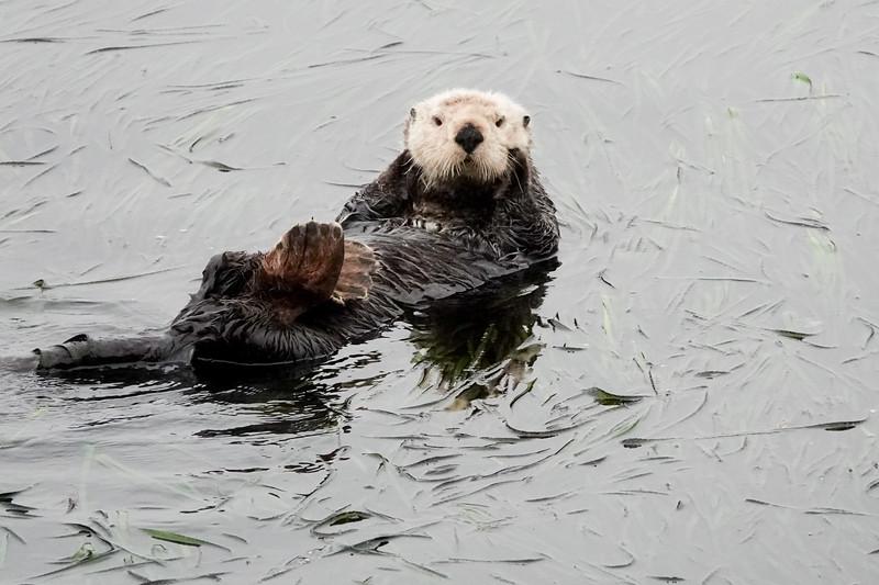 """Otter Sighting"""