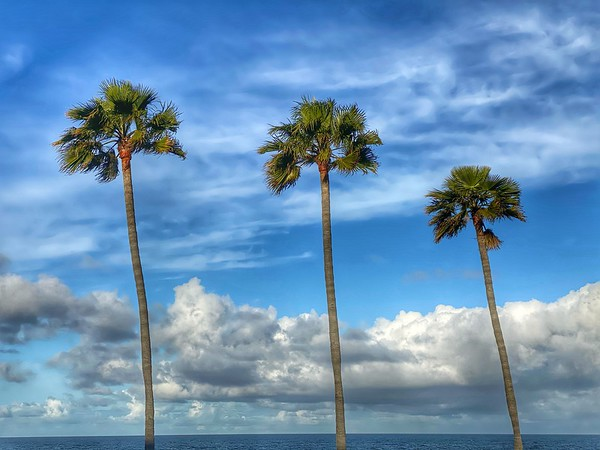 """""""Palm Trees and Clouds"""""""