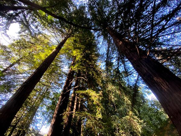 """Pfeiffer Trees"""