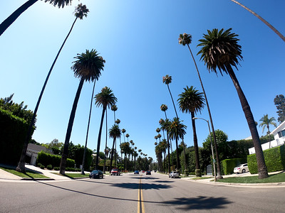 """Beverly Hills palm trees"""