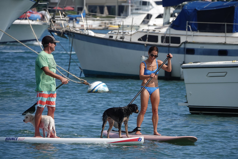 Bringing the dogs for SUP day  on Newport Harbor
