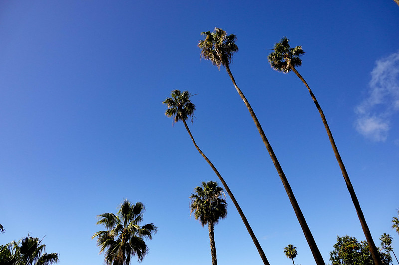 Palm Trees, as seen from Heisler Park