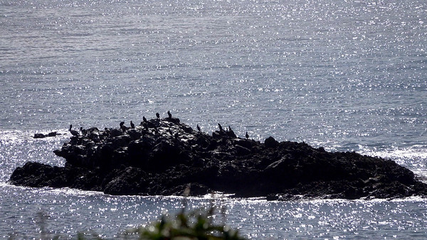 Birds island they call it