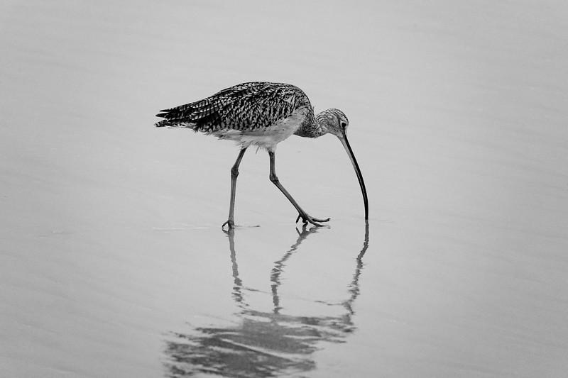 A morning bird in Huntington Beach