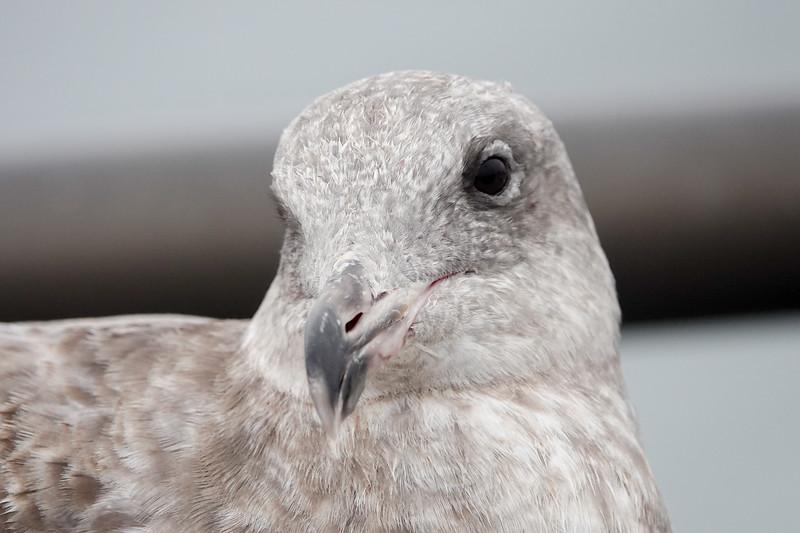 A local bird
