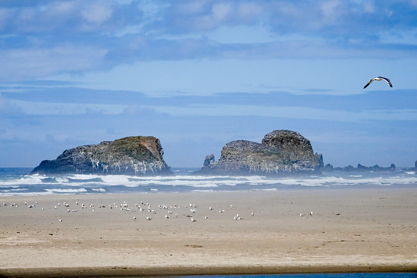 A bird flies over the coast of Cannon Beach, Oregon