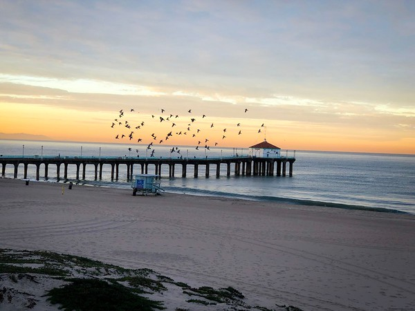 """The Birds of Manhattan Beach"""