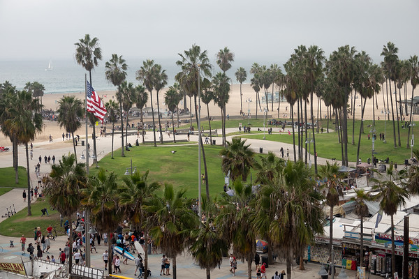View of the Venice Beach Ocean Front Walk is obstructed by the palm trees in this 7th story view from the Erwin Hotel.