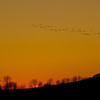 Geese Flight at Sunset