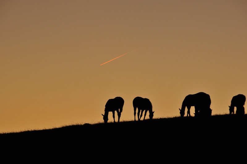 Four Horses Grazing at Sunset