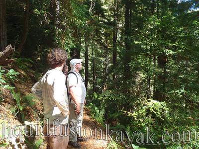 A stellar hike of 9 miles through old growth Douglas Fir and Redwood Forests.